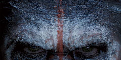Skin, Organism, Primate, Terrestrial animal, Jaw, Snout, Darkness, Organ, Iris, Wrinkle,