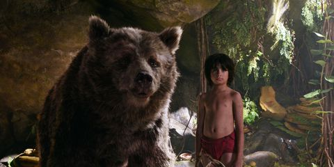 Organism, Brown bear, Bear, Adaptation, Carnivore, Kodiak bear, Temple, Snout, Terrestrial animal, Fur,