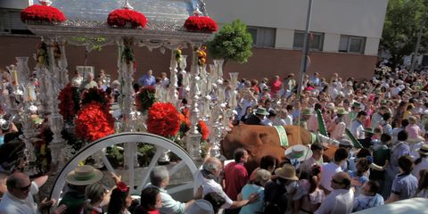 Crowd, Mammal, Tradition, Audience, Festival, Parade, Coquelicot, Flower Arranging, Holiday, Cut flowers,