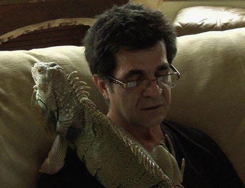 Eyewear, Glasses, Vision care, Textile, Reptile, Iguania, Jaw, Green iguana, Iguanidae, Sweater,