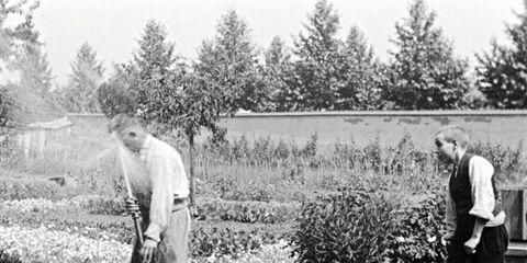 Tree, Standing, Photography, Recreation, Black-and-white, Gardener,