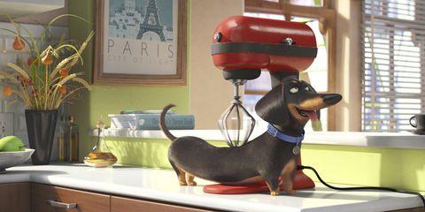 Vertebrate, Dog breed, Dog, Carnivore, Snout, Collar, Interior design, Pet supply, Window covering, Window blind,