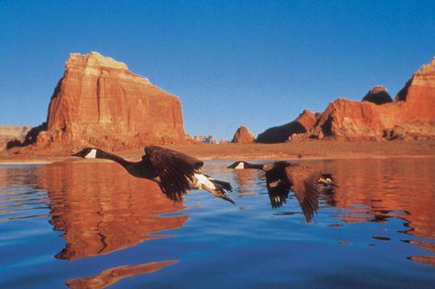 Coastal and oceanic landforms, Water, Rock, Reflection, Geology, Formation, Bird, Bedrock, Outcrop, Lake,