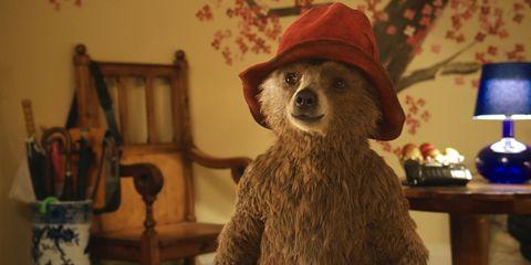 Hat, Room, Headgear, Costume accessory, Terrestrial animal, Snout, Fur, Costume hat, Fedora, Sun hat,