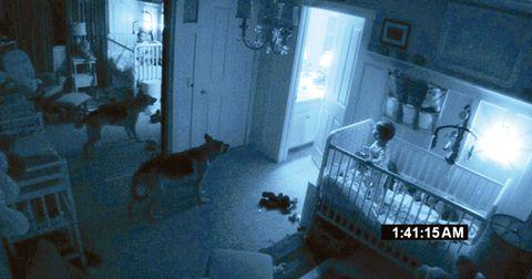 Floor, Room, Dog, Flooring, Carnivore, Interior design, Door, Home, Dog breed, Home door,