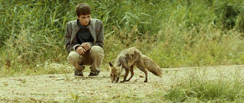 Human, Mammal, Carnivore, Adaptation, Grass family, Fox, Terrestrial animal, Wildlife, Canidae, Fur,