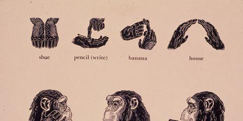 Organism, Primate, Terrestrial animal, Illustration, Drawing, Snout, Painting, Artwork, Sketch,