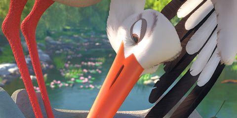 Stork, Bird, White stork, Ciconiiformes, Beak, Bird nest, Plant, Tableware, Cutlery, Pelecaniformes,