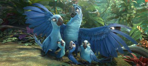 Nature, Blue, Beak, Organism, Vertebrate, Bird, Wing, Teal, Aqua, Art,