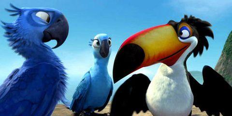 Nature, Organism, Blue, Beak, Vertebrate, Bird, Photograph, Adaptation, Wing, Azure,