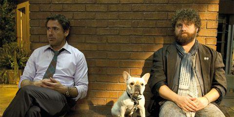 Dog breed, Human, Sitting, Carnivore, Dog, Vertebrate, Mammal, Companion dog, Sporting Group, Facial hair,