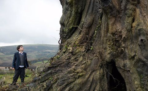 Trunk, Terrestrial plant, Root, Suit trousers, Old-growth forest,