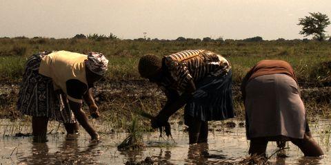 Mammal, Wetland, Agriculture, People in nature, Farmworker, Farmer, Mud, Field, Tidal marsh, Marsh,