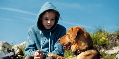 Human, Dog breed, Vertebrate, Dog, Mammal, Collar, Carnivore, People in nature, Sporting Group, Winter,