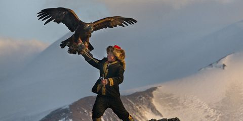 Bird, Bird of prey, Accipitridae, Accipitriformes, Wing, Beak, Falconiformes, Adventure, Feather, Eagle,
