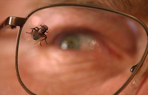 Close-up, Skin, Eye, Organ, Pest, Macro photography, Parasite, Glasses, Ear,