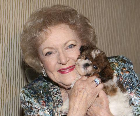 Dog, Canidae, Maltepoo, Shih tzu, Dog breed, Puppy, Puppy love, Companion dog, Skin, Cavachon,