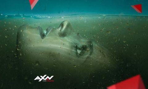 Cartilaginous fish, Fish, Shark, Lamniformes, Great white shark,