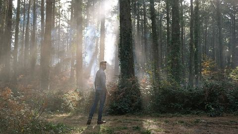 People in nature, Forest, Woodland, Tree, Natural environment, Atmospheric phenomenon, Old-growth forest, Sunlight, Biome, Northern hardwood forest,