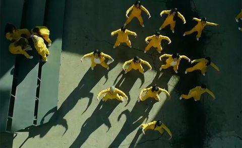 Yellow, Plant, Organism, Flower,
