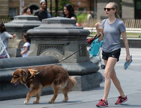 Hair, Human, Dog breed, Leg, Dog, Human leg, Carnivore, Sporting Group, Shorts, Thigh,