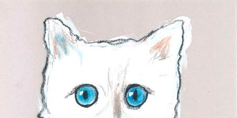 Whiskers, Vertebrate, Small to medium-sized cats, Felidae, White, Cat, Carnivore, Snout, Aqua, Terrestrial animal,