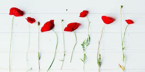 Red, Coquelicot, corn poppy, Flower, Botany, Plant, Pedicel, Plant stem, Poppy family, Petal,