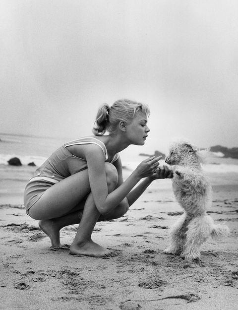 Elbow, Dog breed, Carnivore, Toe, Dog, Barefoot, Foot, Companion dog, Beach, Sand,