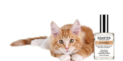 Brown, Small to medium-sized cats, Felidae, Whiskers, Carnivore, Cat, Peach, Kitten, Beige, Cosmetics,