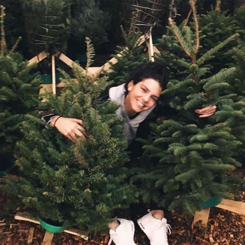 Christmas decoration, Holiday, Christmas, Woody plant, Christmas tree, Evergreen, Christmas ornament, Interior design, Christmas eve, Pine family,