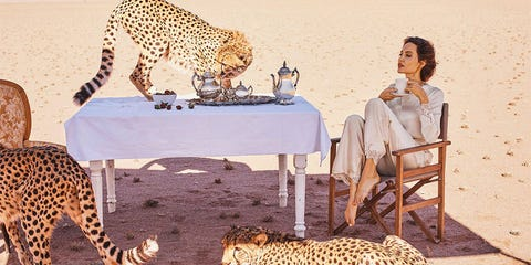 Terrestrial animal, Wildlife, Felidae, Cheetah, Small to medium-sized cats, Adaptation, Snout, Carnivore, Big cats, Leopard,