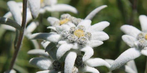 Vegetation, Petal, Flower, White, Botany, Terrestrial plant, Frost, Flowering plant, Close-up, Shrub,