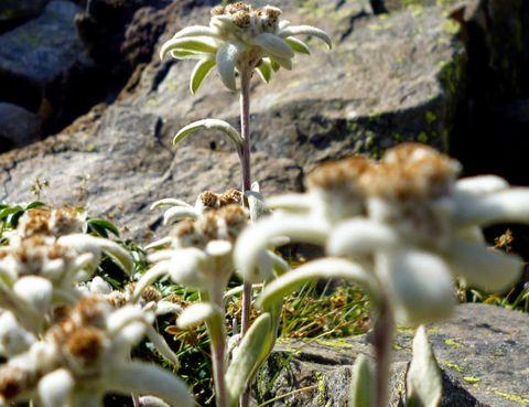 Vegetation, Organism, Botany, Terrestrial plant, Flowering plant, Wildflower, Herbaceous plant, Plant stem, Lily family, Perennial plant,