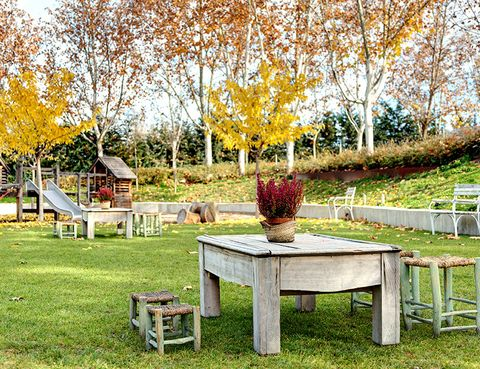 Branch, Leaf, Table, Tree, Outdoor furniture, Furniture, Deciduous, Outdoor table, Autumn, Twig,