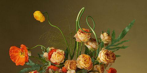 Serveware, Flower, Flowering plant, Botany, Petal, Vase, Artifact, Still life photography, Orange, Art,
