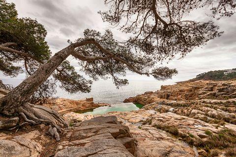 Branch, Rock, Bank, Bedrock, Shore, Trunk, Outcrop, Formation, Coast, Twig,
