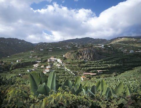 Vegetation, Cloud, Plant community, Landscape, Highland, Plantation, Terrestrial plant, Mountain, Botany, Agriculture,