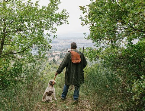 Human, Mammal, People in nature, Carnivore, Forest, Canidae, Jungle, Woodland, Toy, Backpack,