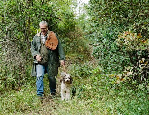 Dog, Canidae, Sporting Group, Carnivore, Tree, Field trial, Woodland, Plant, Forest, Shrub,