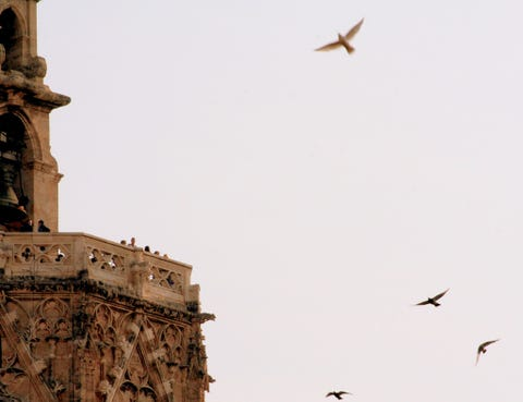 Sky, Bird, Vertebrate, Bird migration, Wing, Flight, Animal migration, Wildlife, Holy places, Historic site,