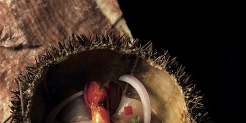 Organism, Adaptation, Terrestrial plant, Macro photography, Bird, Marine biology,
