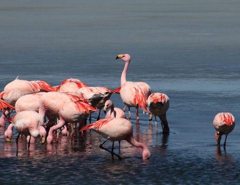Body of water, Flamingo, Organism, Greater flamingo, Bird, Vertebrate, Water, Water resources, Natural landscape, Red,