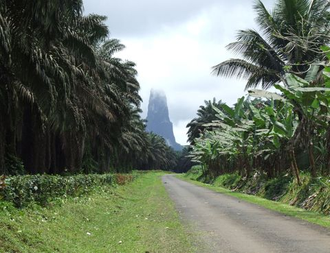 Vegetation, Road, Woody plant, Arecales, Terrestrial plant, Plantation, Forest, Thoroughfare, Trail, Grass family,
