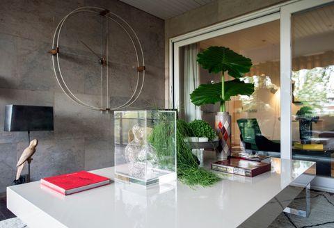 Display case, Houseplant, Herb,