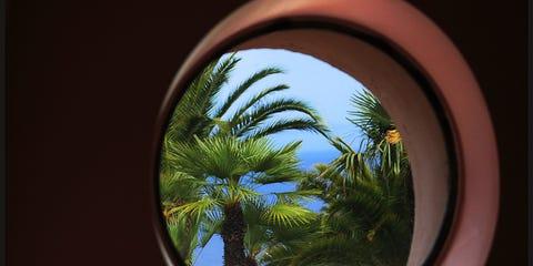 Woody plant, Tints and shades, Fixture, Arecales, Tropics, Circle, Palm tree, Daylighting, Attalea speciosa,