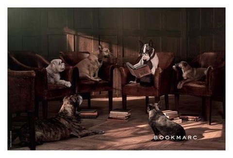 Brown, Vertebrate, Carnivore, Interior design, Room, Dog, Furniture, Dog breed, Living room, Grey,