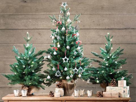 Cómo Elegir El árbol De Navidad Especial Navidad