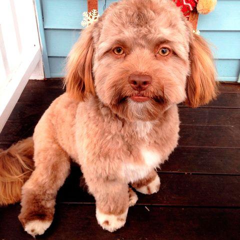 Yogi, el perro con cara de humano que arrasa en Internet