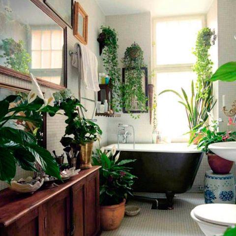 Green, Houseplant, Room, Flowerpot, Property, Bathroom, Interior design, Architecture, Plant, Home,