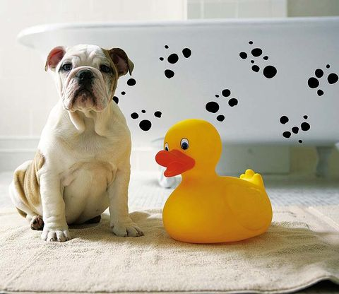 rubber ducky, Vertebrate, Dog, Bath toy, Carnivore, Dog breed, Ducks, geese and swans, Toy, Beak, Bulldog,